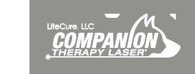 Companion Therapy