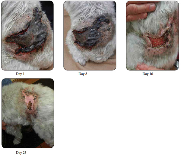 Cedar Pet Clinic Wound