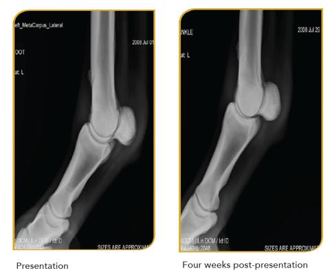 Equine Bone Fracture Case Study Images