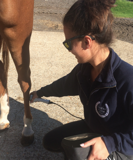 Lingfield Equine Vets Case Study Photo